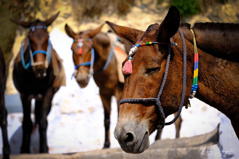 Donkeys waiting