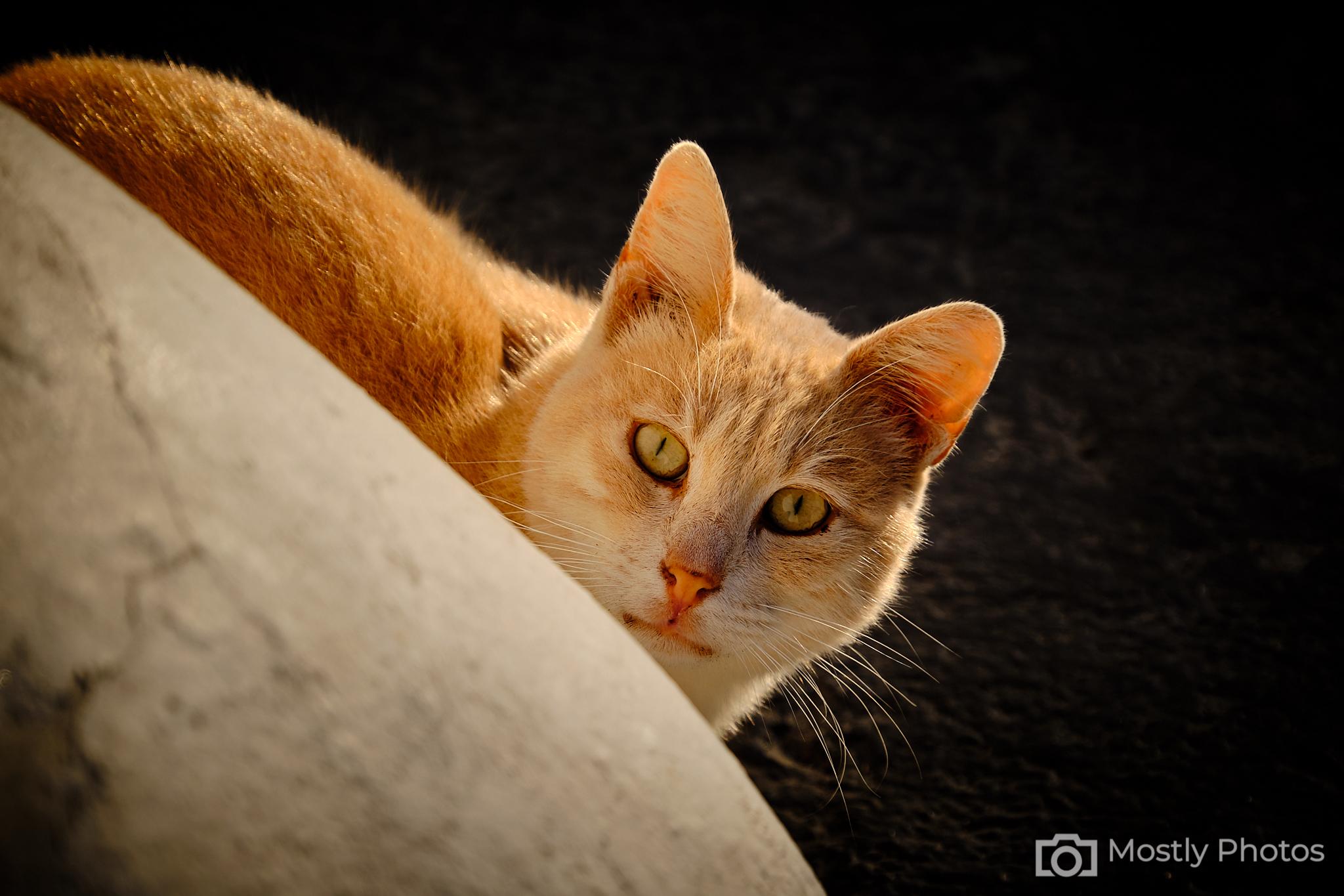 Ginger Cat Fuji X-T3 - Santorini, Greece
