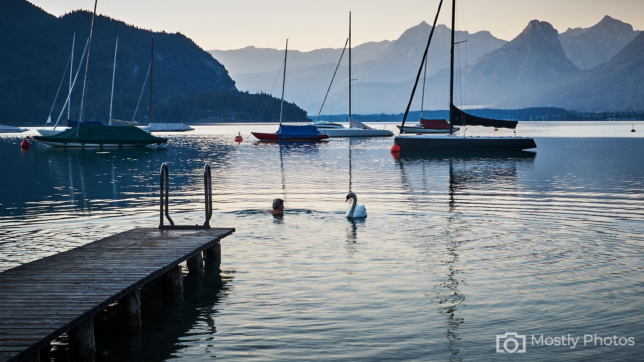 Swan and Swimmer Lake Wolfgang, Austria - Fuji X-T2