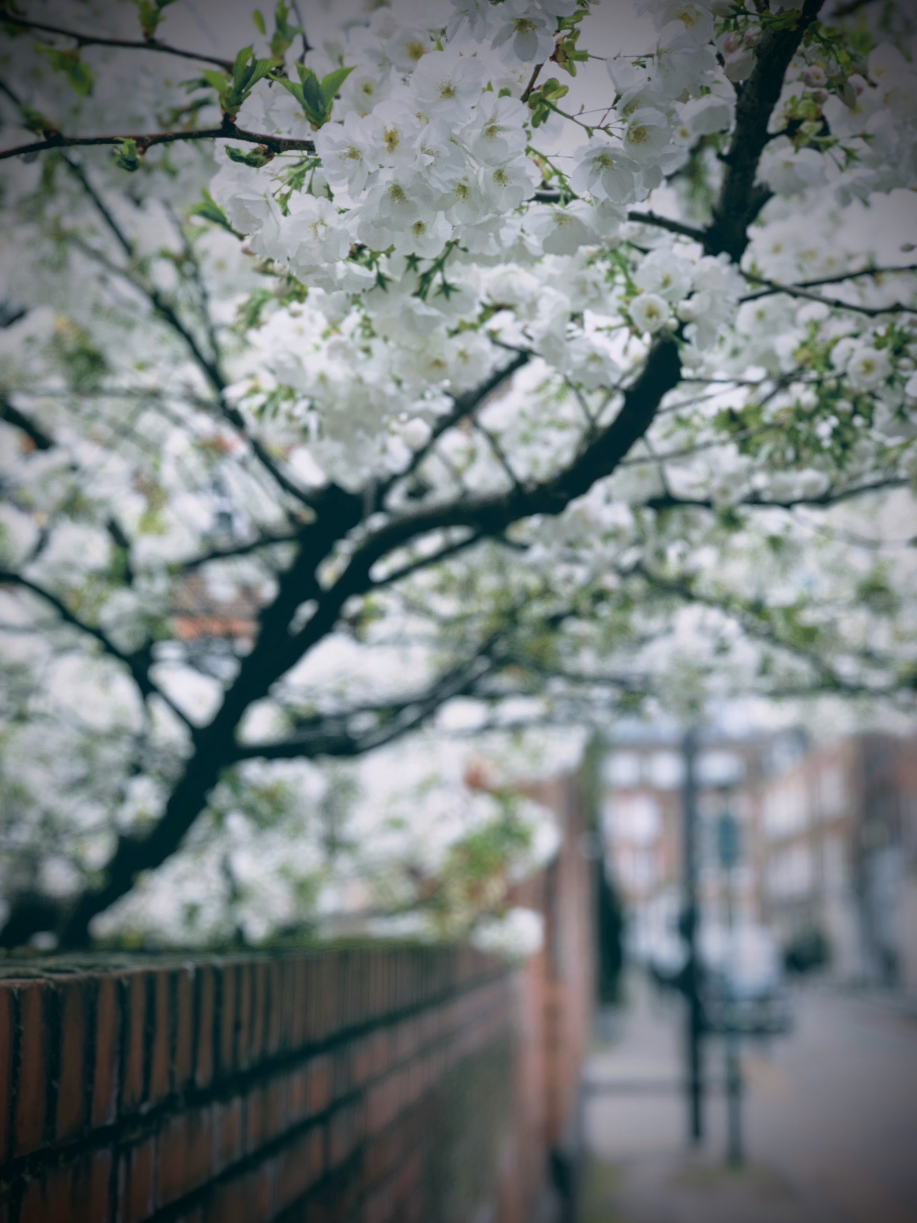 Spring Blossom in Shoreditch - iPhone XS vs Fuji X-T3