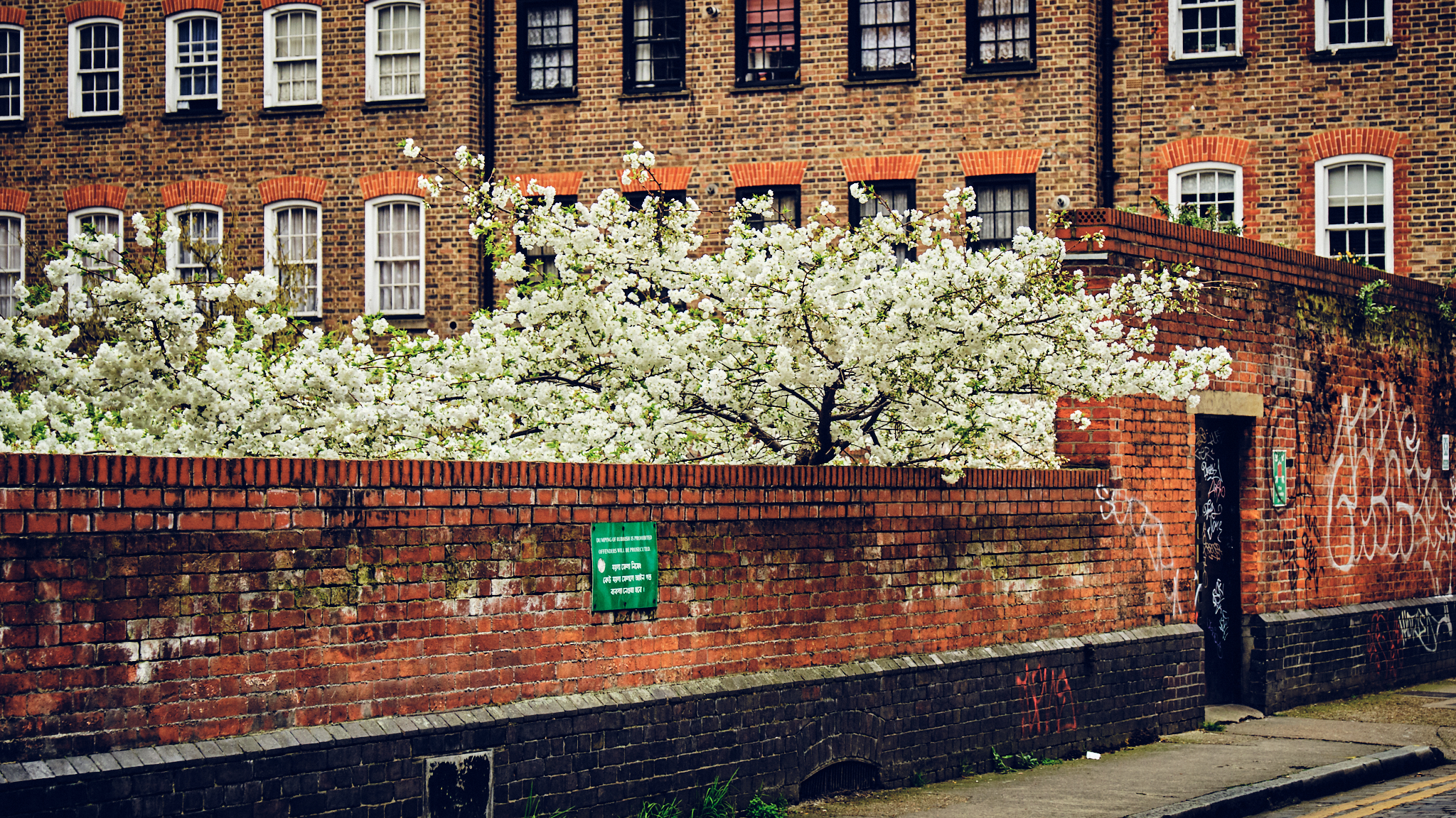 Cherry Blossom in East London Fuji X-T3 16-55mm
