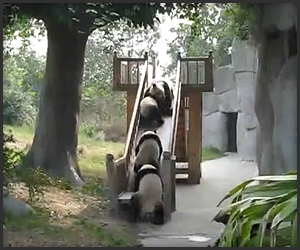 See all 5 »  
