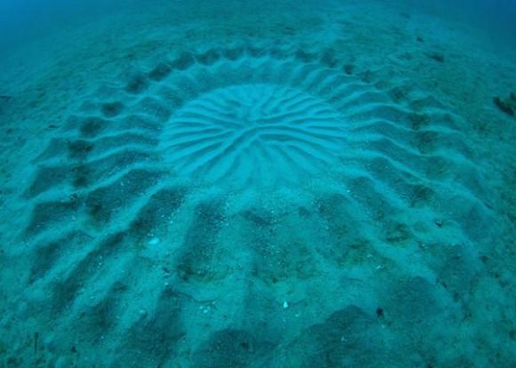 underwater-mystery-circle-2-580x414.jpeg