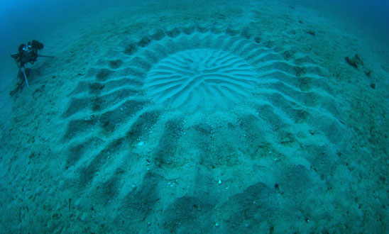2 - JAPANESE UNDERWATER 'CROP CIRCLES'