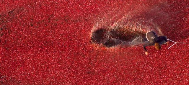 cranberry-4.jpg