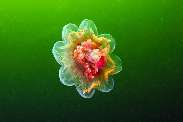 jelly-5.jpg