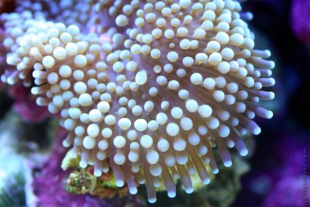 coral-8.jpg