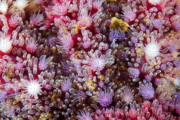 starfishmacro-7.jpg
