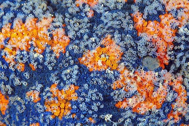 starfishmacro-4.jpg