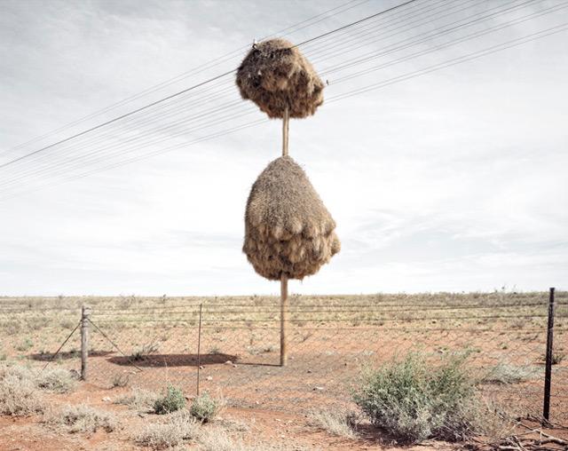 nest-8.jpg