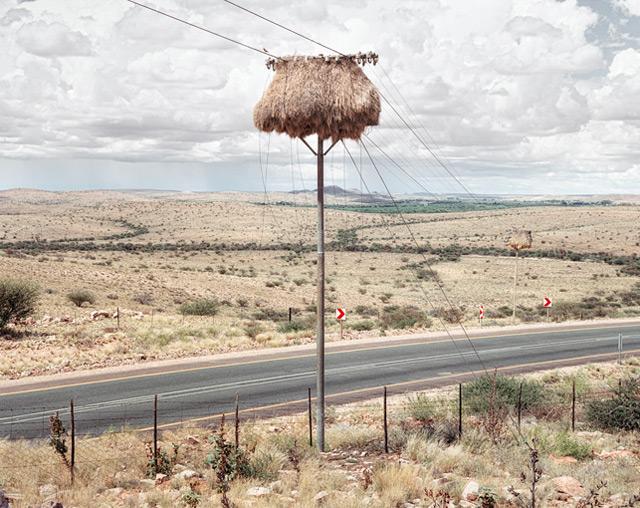 nest-5.jpg
