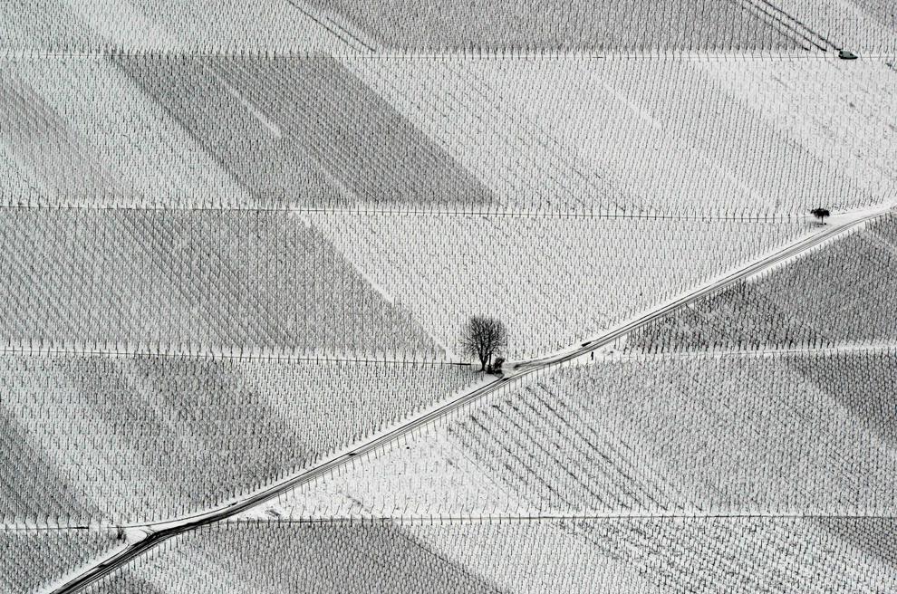 Vineyards in Ebingen, Germany Feb 8