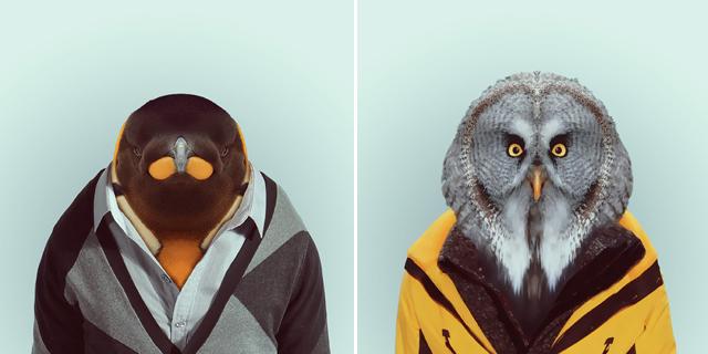 Fashion-Zoo-Animals6.jpg