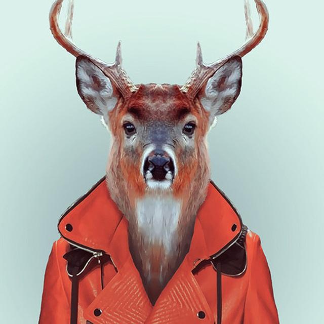 Fashion-Zoo-Animals21.jpg