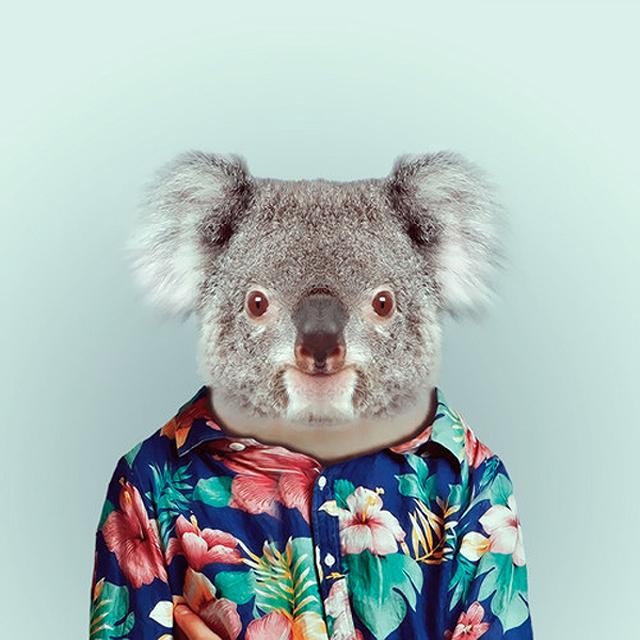 Fashion-Zoo-Animals25.jpg