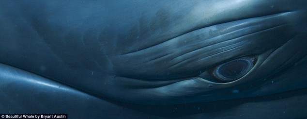 Beautiful-Whale-by-Bryant-Austin-01-634x245.jpg