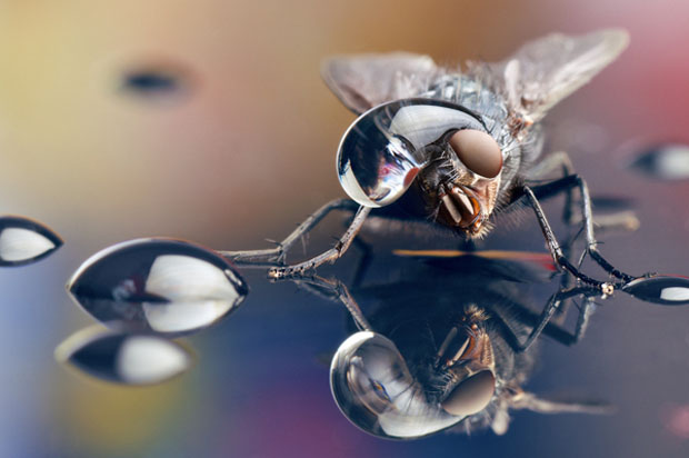 waterdropinsects-1.jpg