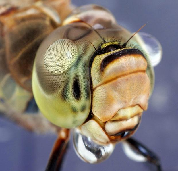waterdropinsects-6.jpg