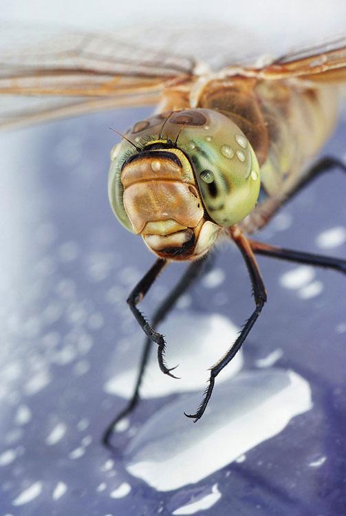 waterdropinsects-7.jpg