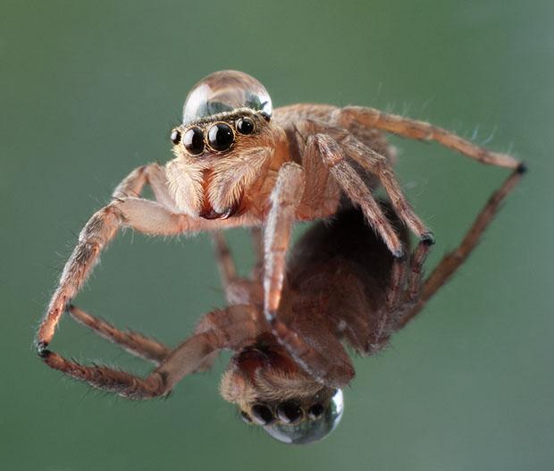 waterdropinsects-4.jpg