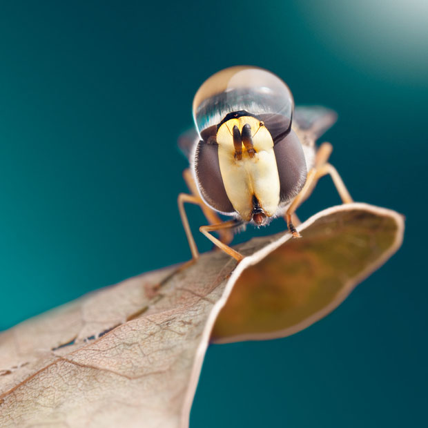 waterdropinsects-3.jpg