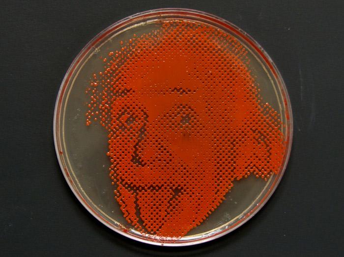 small-einstein-plate.jpg