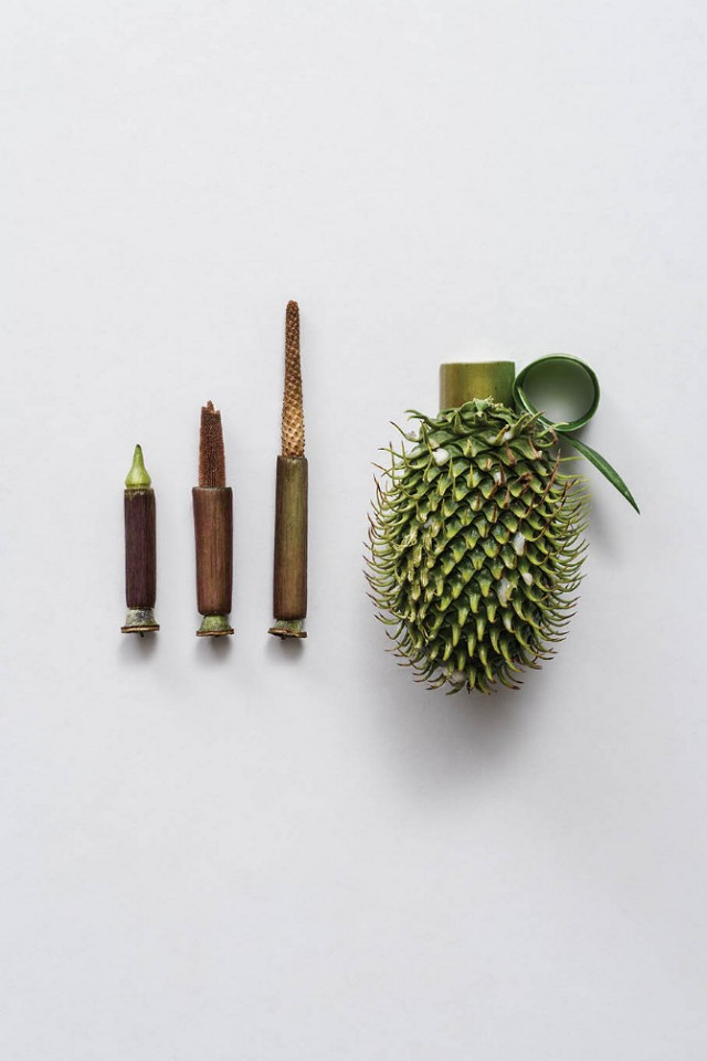 Weapons-made-of-Plants3-640x960.jpg