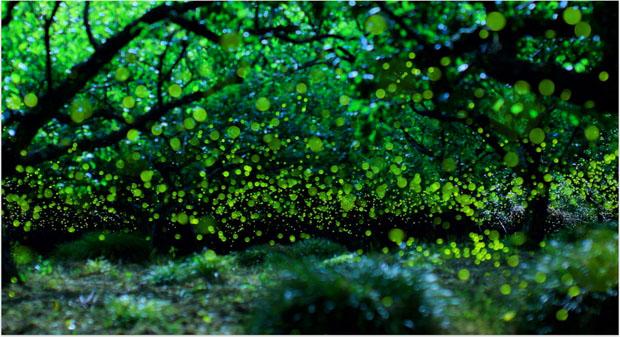 yumefireflies-1.jpg