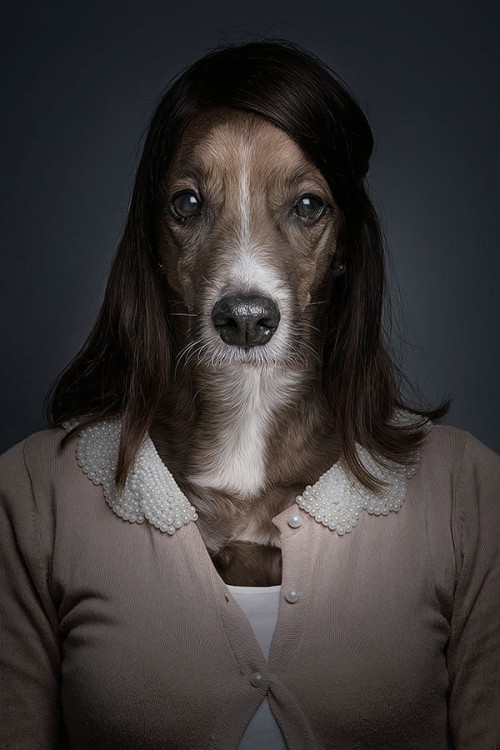 half-human-half-dog-portraits-sebastian-magnani-4-500x750.jpg