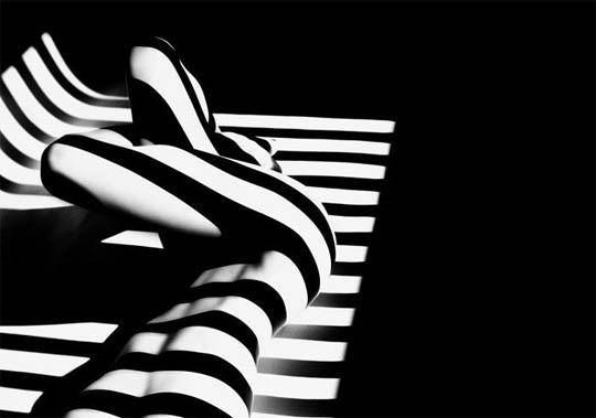 francis-giacobetti-zebra-08.jpg