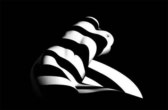 francis-giacobetti-zebra-06.jpg