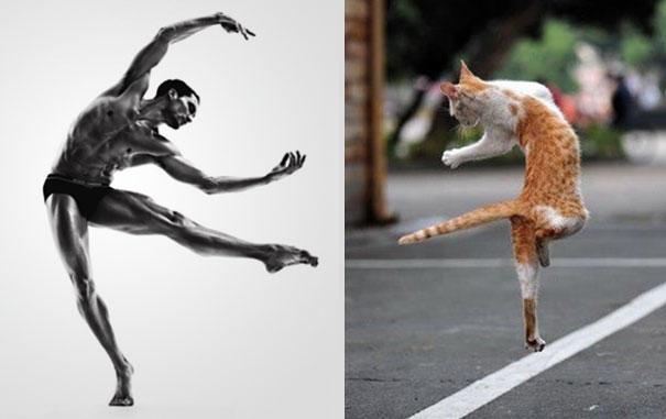 des-hommes-et-des-chatons-men-and-cats-31.jpg