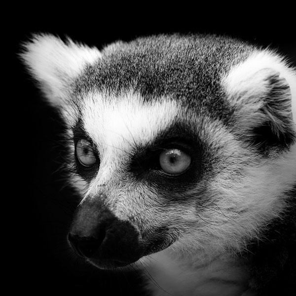 black-and-white-fine-art-animal-portraits-by-lukas-holas-1.jpg