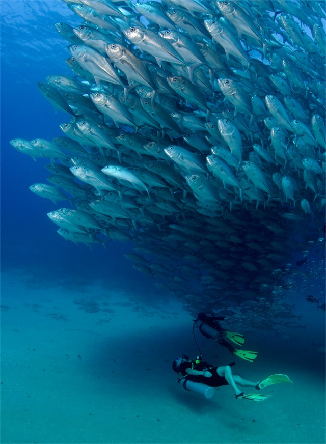 Fish-Tornado-4-640x872.jpg