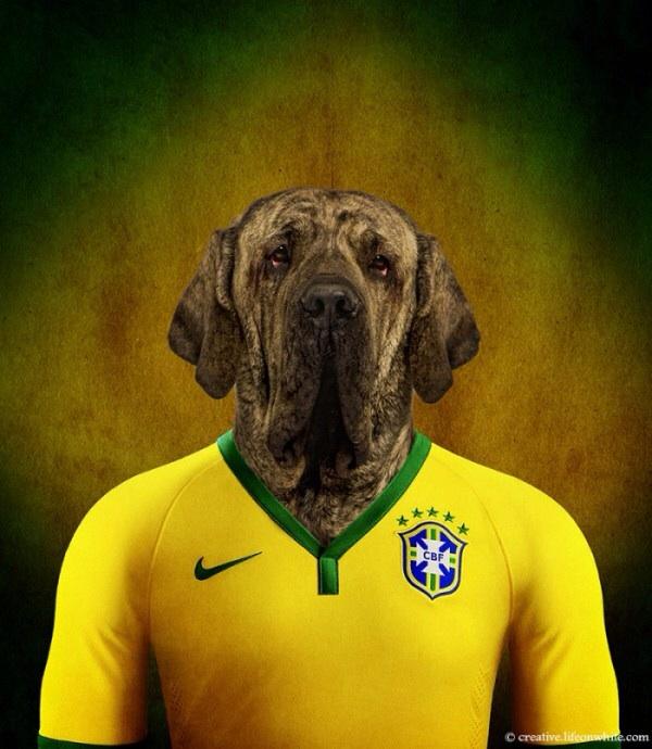 Brazil - Brazilian Mastiff
