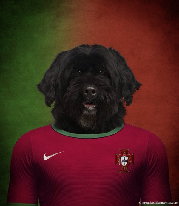 Portugal - Portuguese Water Dog