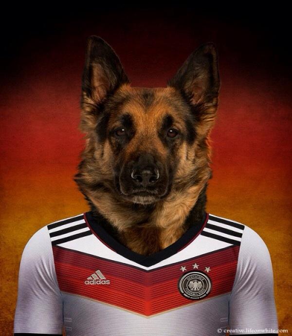 Germany - German Shepherd