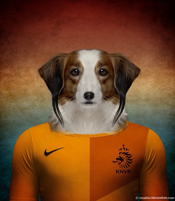 The Netherlands - Kooikerhondje