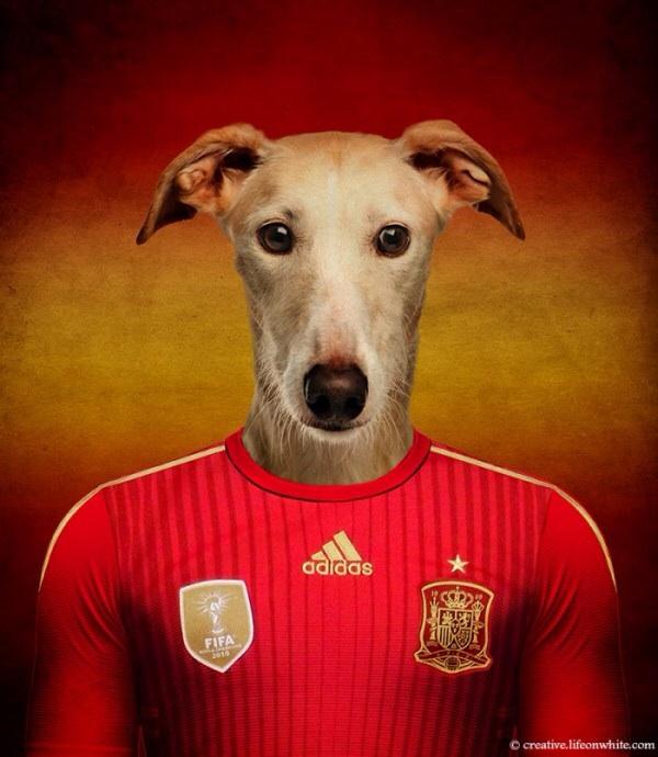 Spain - Spanish Galgo