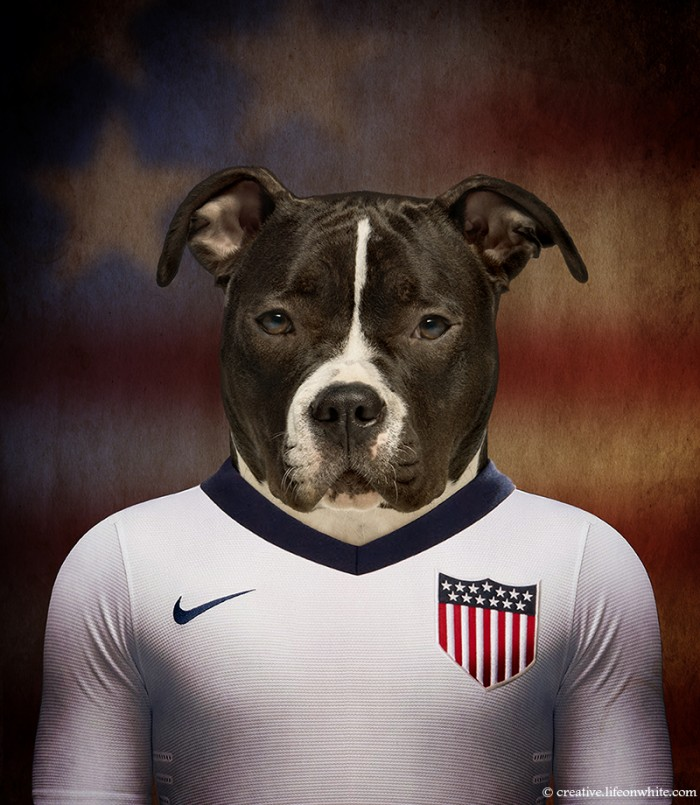 US - American Staffordshire Terrier