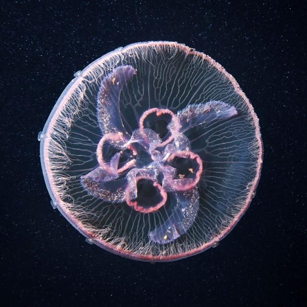 jelly-3-600x600.jpg