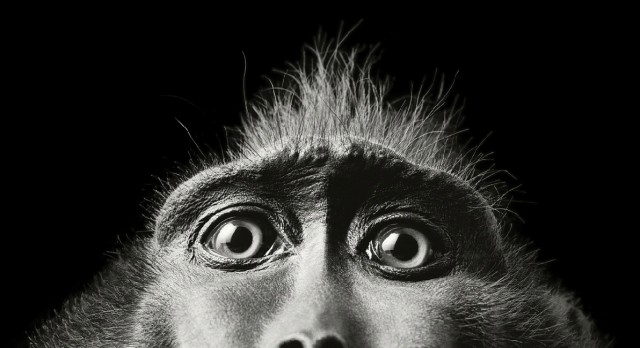 More Human Than Human - Animal Portraits by Tim Flach