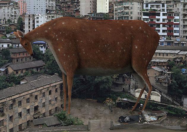 Fat_animals_feeldesain_02.jpg