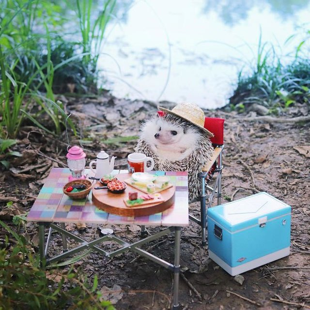 hedgehog-azuki-goes-on-camping-trip-3.jpg