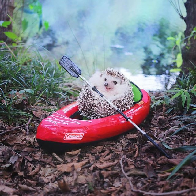 hedgehog-azuki-goes-on-camping-trip-4.jpg