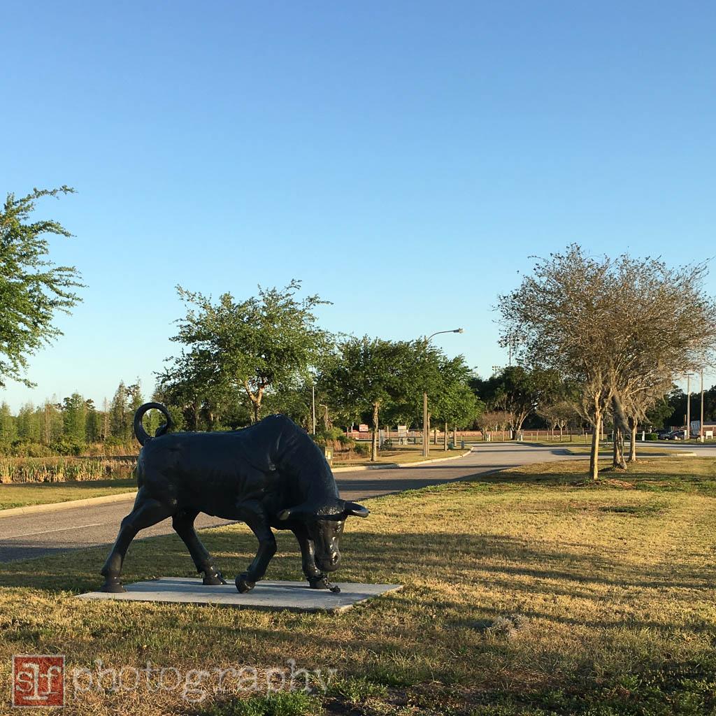 wiregrass ranch high school mascot