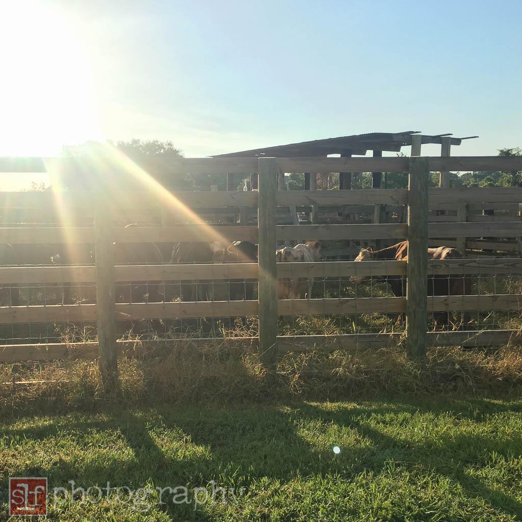 wiregrass ranch corral