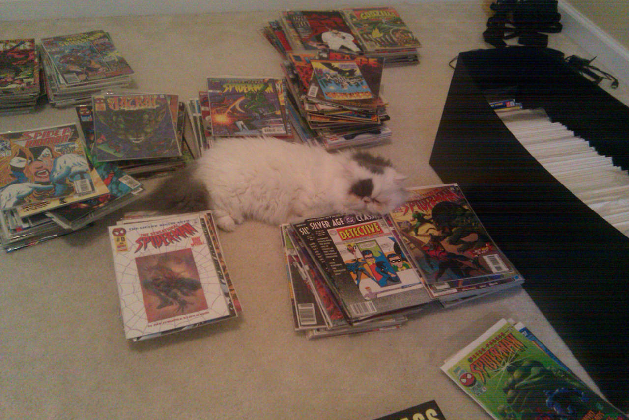 Fluffy loves comics.
