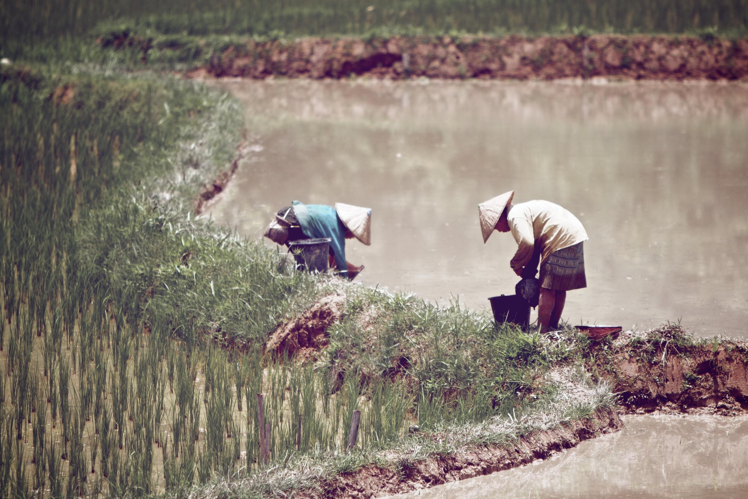 farmers near Vang Vieng Laos.jpg