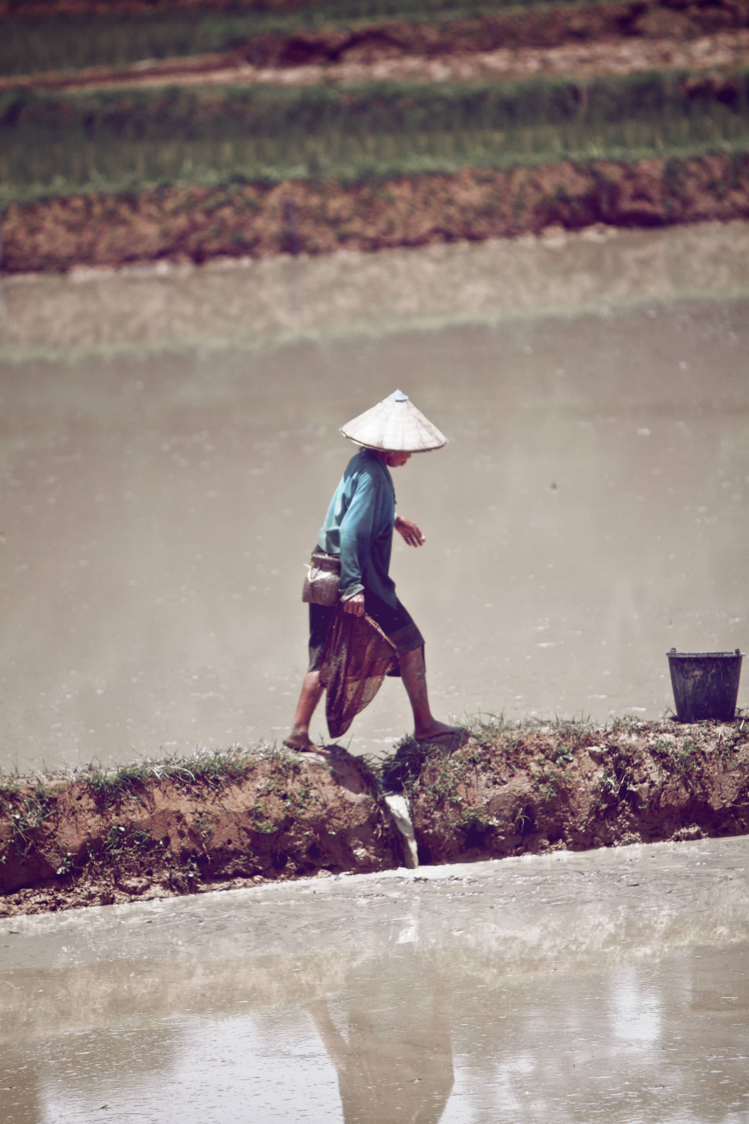 Muddy farm land for rice.jpg